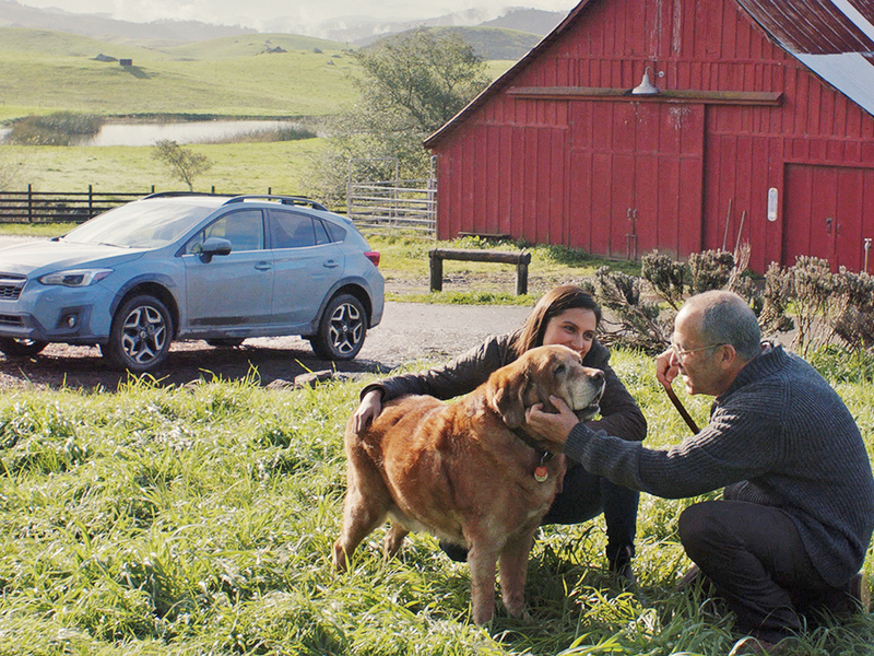 New Subaru Crosstrek ad features a dog, the outdoors and an old crossover