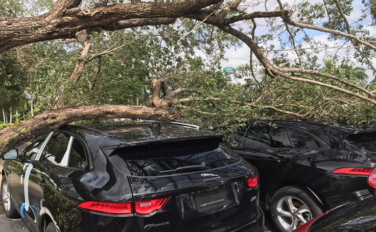 Irma forces dealerships, ports to close